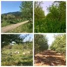 Collage photo of different almond orchards